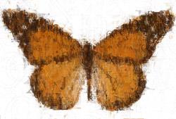 monarch_7