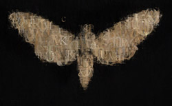 moth_5